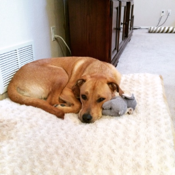 "Dallas with his little elephant...before ""the incident."""
